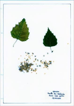Herbiers6_1
